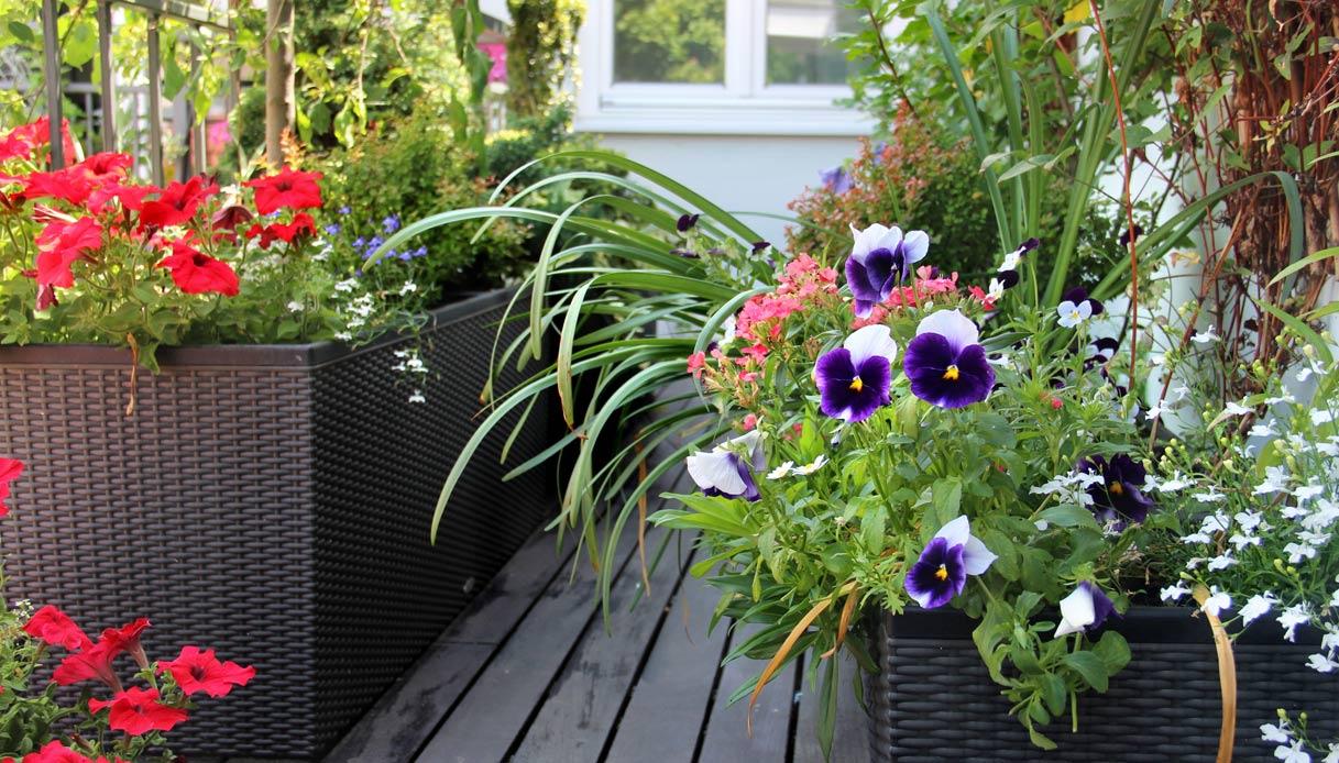 Fiori Da Balcone Ombra come far fiorire un balcone, dalla scelta delle piante all