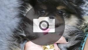 cucciolo_gallery