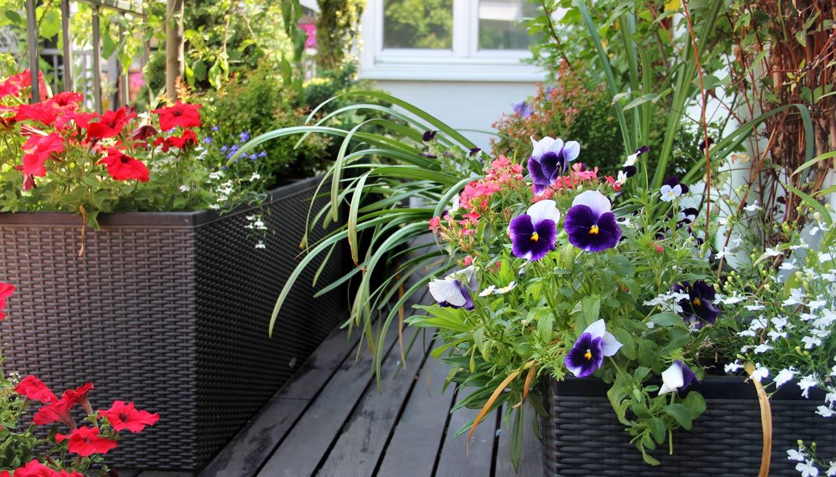 Fiori Perenni Da Balcone consigli per un balcone fiorito tutto l'anno | dilei