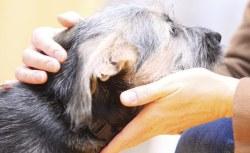 Prima carezza al cane maltrattato: la reazione