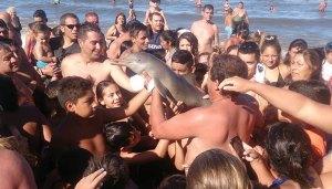 delfino-ucciso-per-un-selfie1217