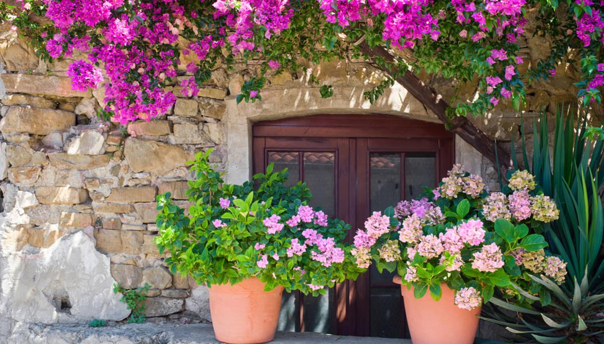 Rampicanti Che Crescono All Ombra 5 piante per avere tanti fiori sul balcone in ombra | dilei