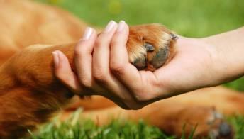 Il cuore del tuo cane batte in sincro con il tuo. Lo sapevi?