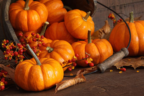 Small pumpkins with bucket against wood