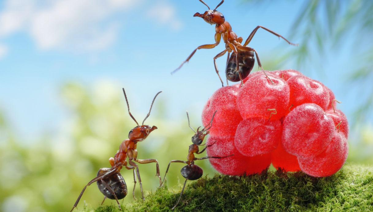 Prodotti Efficaci Contro Le Formiche come tenere lontane le formiche: ottimi rimedi naturali | dilei