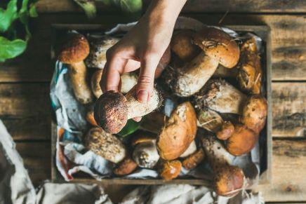 Funghi: 5 proprietà benefiche