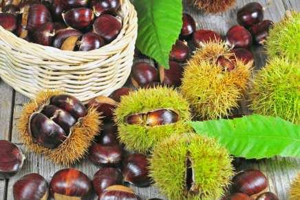 Castagne: 5 buoni motivi per gustare questi frutti autunnali