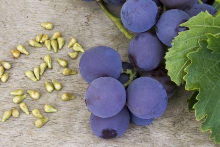 I semi d'uva fanno bene, ecco quali sono le loro proprietà