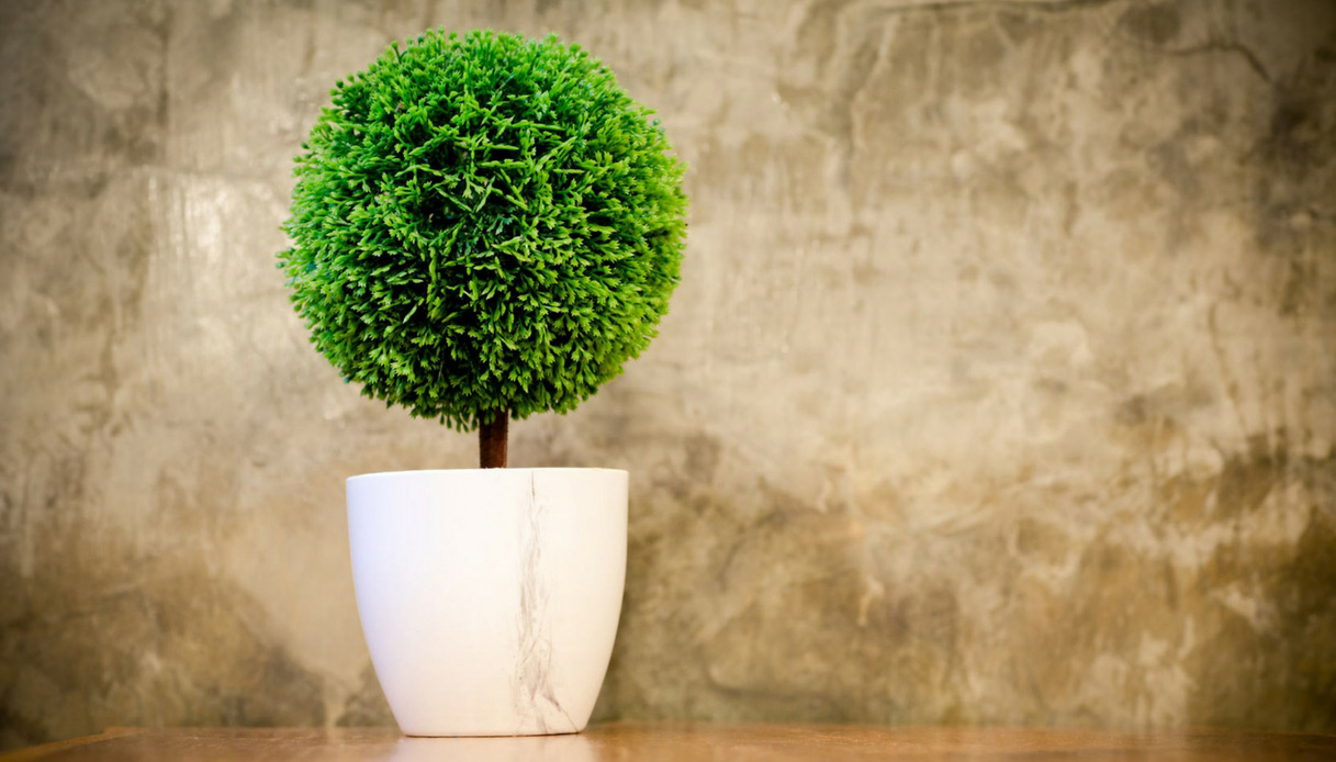 Piante Da Arredo Appartamento come arredare un appartamento con le piante artificiali | dilei