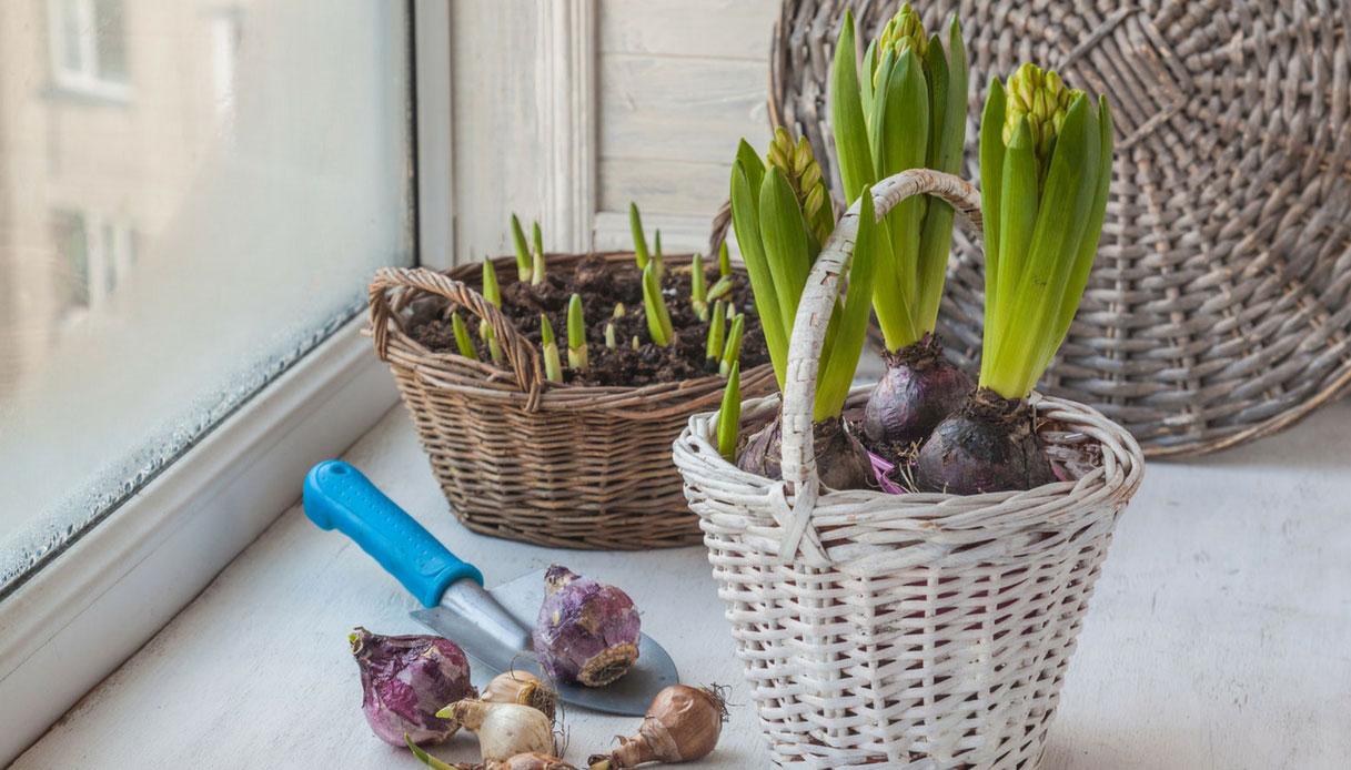 Edera Pianta Da Interno piante da interno: come prendersene cura | dilei