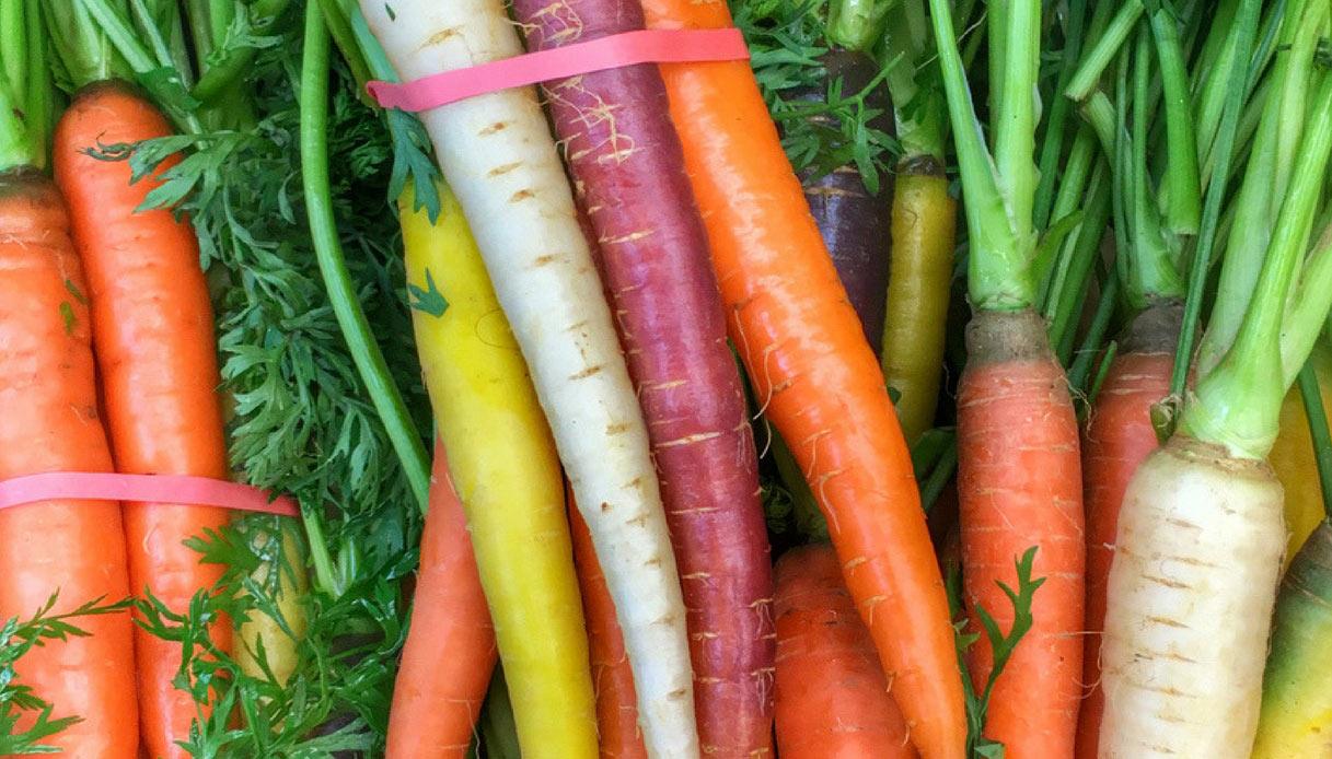 carote-arcobaleno-consigli-per-coltivarle-sul-balcone-dettaglio