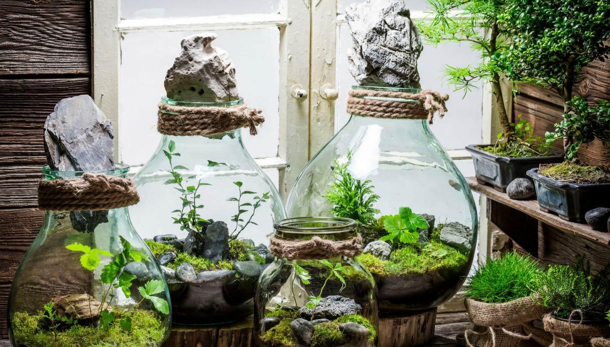 Terrario Per Piante Grasse piante in barattolo: l'idea per un regalo originale | dilei
