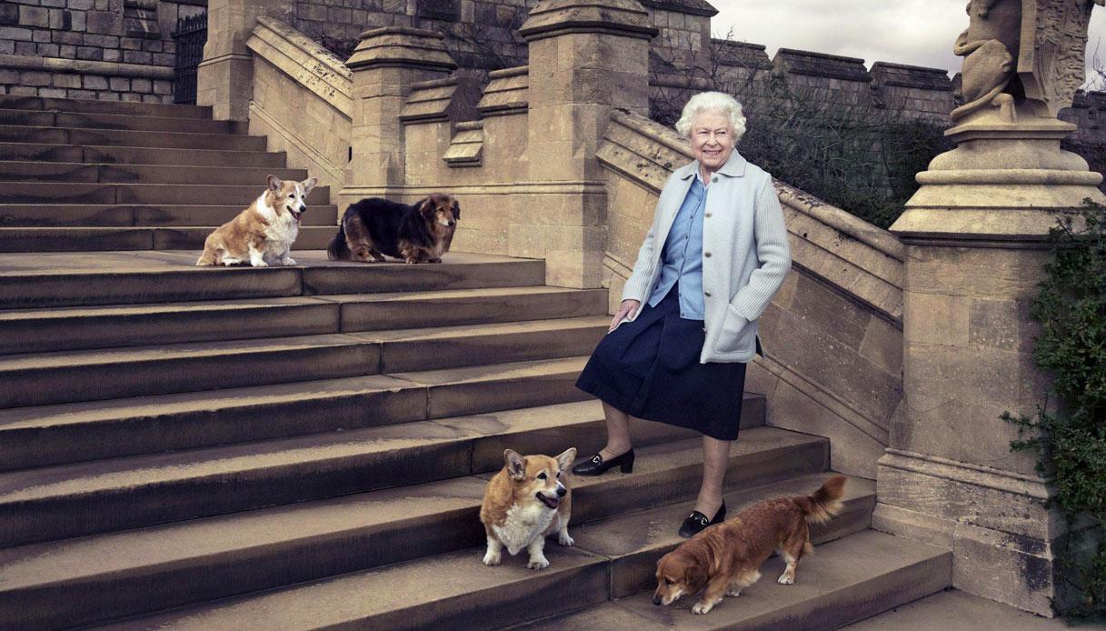 Regina Elisabetta con i suoi cani