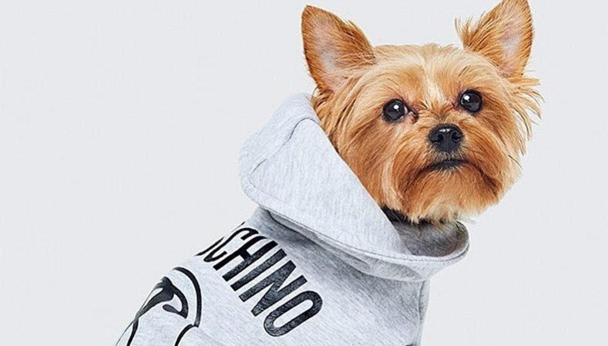 Animali più fashion che mai grazie a Moschino e H&M
