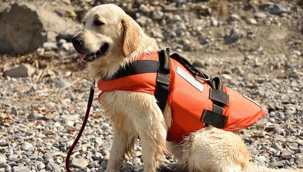 Cane al mare con il salvagente