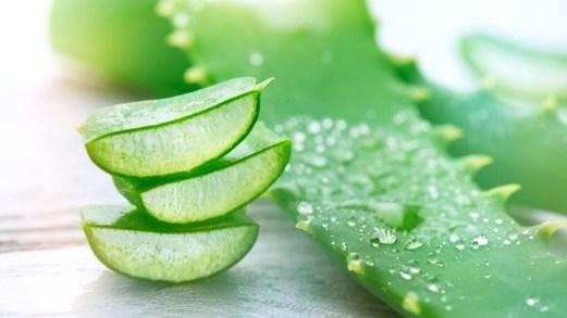 Aloe vera: l'alleato dell'estate per viso, corpo e capelli che è un vero toccasana!