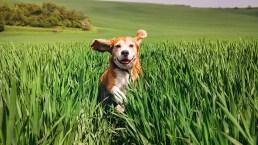 Cane, malattie genetiche legate alla razza