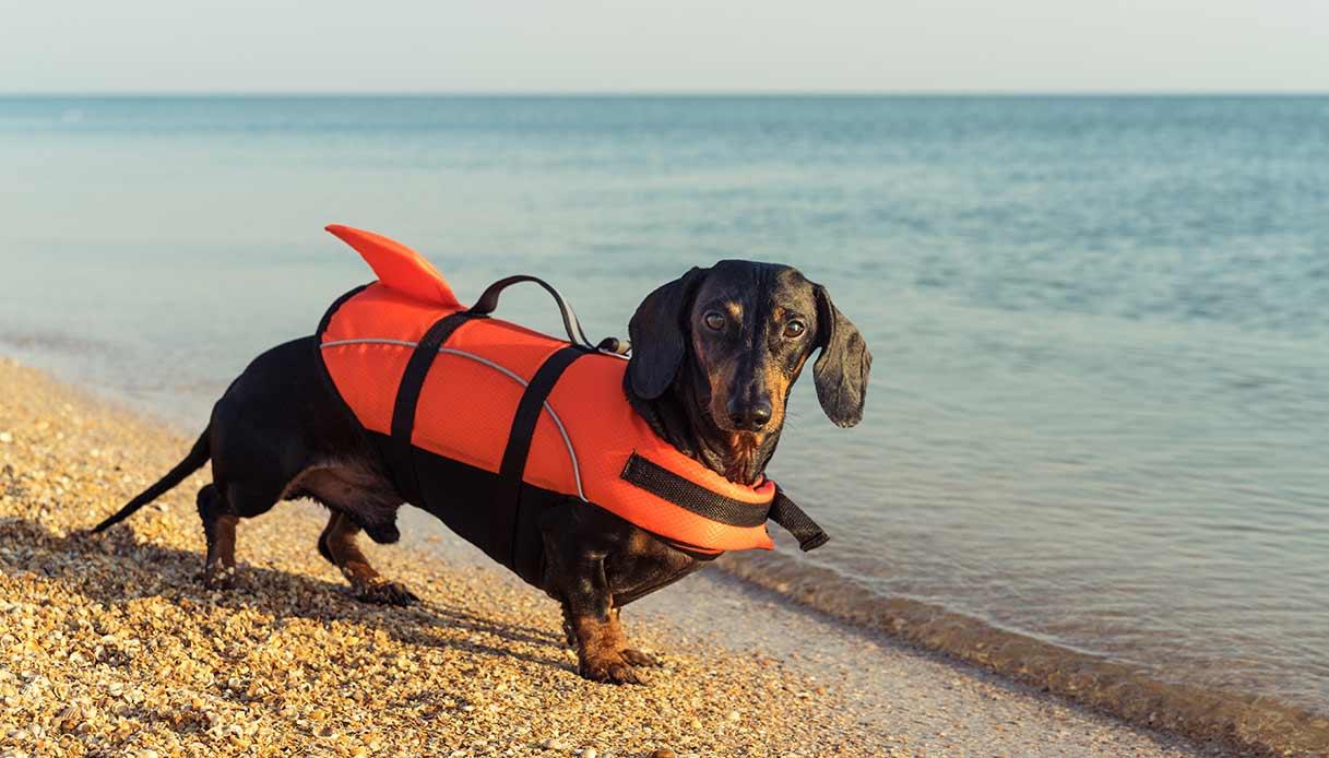 L'uso del giubbotto salvagente per i cani che vanno in acqua è consigliato