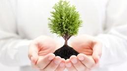 10 piante da regalare per un Natale sostenibile (e pieno d'amore)