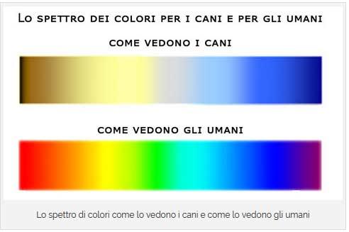Lo spettro dei colori visti dai cani