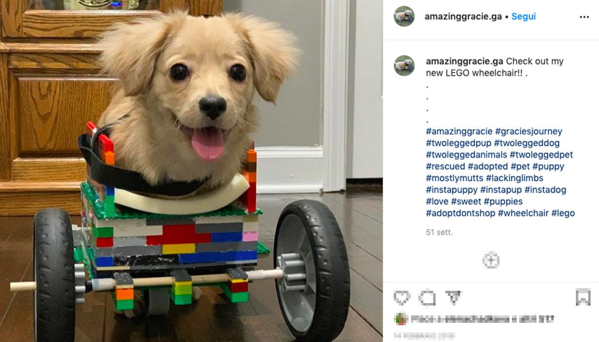 Bambino costruisce un trasportino coi Lego per il suo cane senza zampe