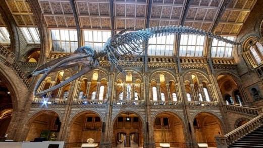 Musei per bambini che si possono visitare online