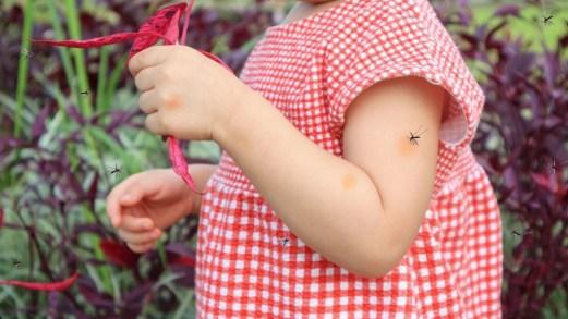 Perché le zanzare pungono: come spiegarlo ai bambini