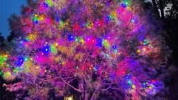 Alberi di Natale vip 2020: i più belli, colorati e originali