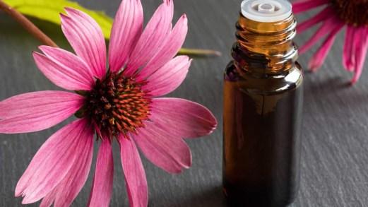 Echinacea: benefici, utilizzi e integratori