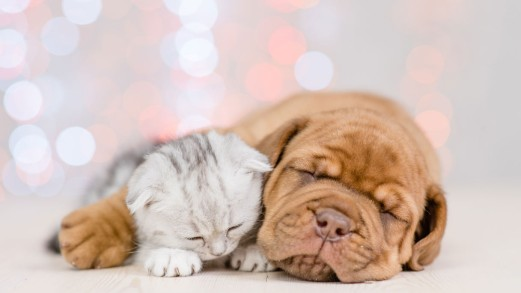 Arriva un cucciolo: cosa serve, come preparare casa