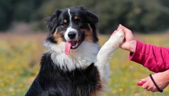 I cani che anticipano le crisi epilettiche negli umani