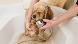 Le cure quotidiane: igiene e tolettatura