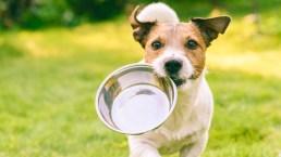 Cani e cibo: la gestione delle risorse
