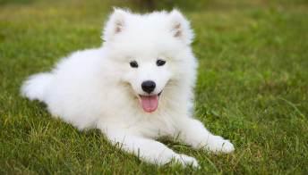 Il cucciolo di cane: consigli, idee e suggerimenti per gestirlo al meglio