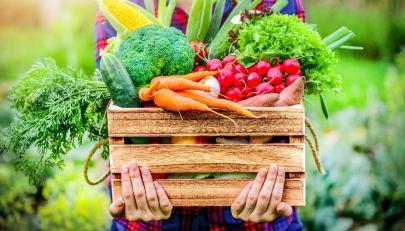 Molecole bioattive negli alimenti: cosa sono e in quali cibi sono contenute