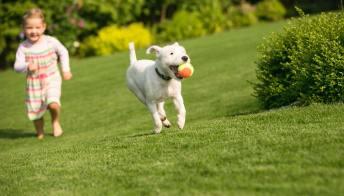 L'importanza del gioco per i cani