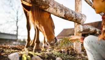 Rebecca e la sua fattoria: la storia di una tredicenne che salva gli animali