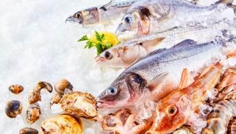 Pesce in estate: attenzione a istamina e sindrome sgombroide