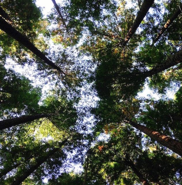 Sostenibilità: 5 documentari da non perdere