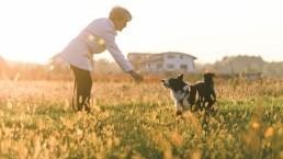 L'attenzione del cane nei confronti del proprietario