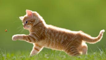 Profilassi stagionale nel gatto