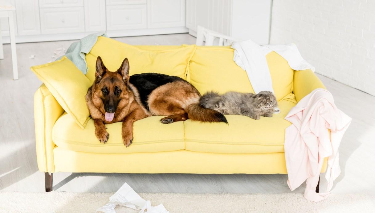 Come proteggere il divano da cani e gatti, peli e graffi