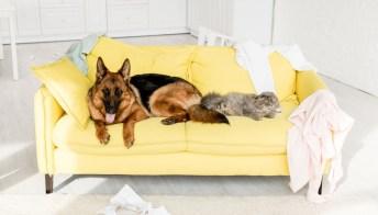 Graffi e peli addio! Proteggi così il tuo divano da cani e gatti